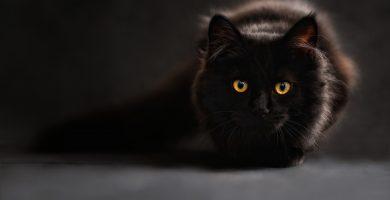 nombres para gatos , nombres de gatos , nombres de gatos machos , nombres para gatos machos , nombres gatos , nombres para gatos hembras , nombres de gatos hembras , nombres para gatas negras , nombres para gatos blancos , nombres originales para gatos , nombres para gatos grises , nombres de gatos famosos , nombres para gatos machos originales , nombres de gatos egipcios , nombre gato macho , nombres egipcios para gatos , nombres de gatos machos originales , nombres bonitos para gatos , nombres de gatos originales , nombres de gatas negras , nombres para gatos naranjas , nombres graciosos para gatos , nombres de gatos blancos , nombres para gatos siameses , nombres para gatos y su significado , nombre de gatas cortos , nombres de gatos graciosos , nombres gatos hembra , nombres para gatos atigrados , nombres para gatas cortos , nombres de gatos mitologicos , nombres de gatas disney ,