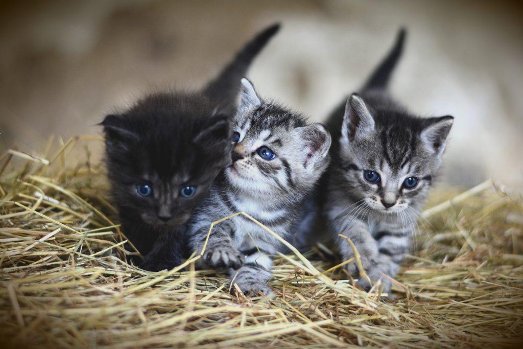 Nombres para gatos, nombres para gatos fáciles,gatos,gatitos