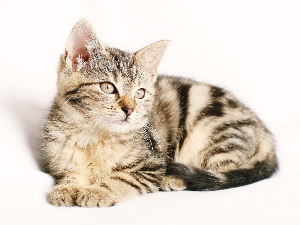 Nombres para gatos, nombres para gatos fáciles,gatos
