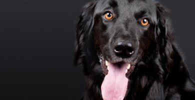 repelente para garrapatas , repelente para perros exterior , repelente orina perros , spray repelente gatos , espanta gatos , repelente natural para gatos , ahuyenta perros , productos para ahuyentar gatos , repelente de garrapatas , repelente natural para perros , repelente para mascotas , el mejor ahuyentador de perros , repelente para perros muebles , liquido ahuyenta perros , pulgas en perros , productos repelentes para perros , spray repelente para gatos , repelente para perros se orinen , repelente perros mercadona , espanta gato , repelente para gatos casero , repelente de perros y gatos , liquido para ahuyentar perros , spray repelente para perros , liquido repelente para perros , repelente para perros orina , repelente de mosquitos para perros , repelente ultrasonico para gatos , repelente perros y gatos , repelente para gatos efectivo , repelente para gatos en el jardin , ahuyentador para perros , repelente de gatos efectivo , ahuyenta perros casero , existe algún repelente realmente efectivo para gatos , repelente perros muebles , repelente de gatos para jardin