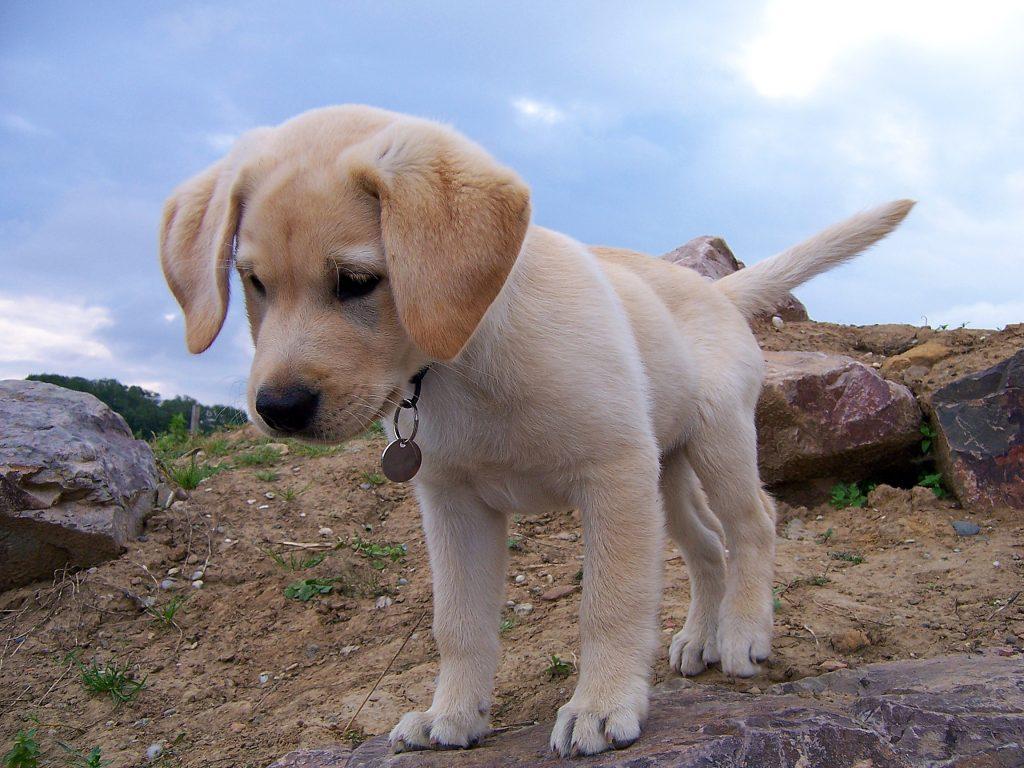 fotos perros , productos veterinarios para perros , tienda de perros de raza , cuales son los perros mas pequeños , precios de perros de raza , perros grandes , imagenes perros , perros em , alimentacion de los perros , datos sobre los perros , tienda de ropa para perros , equipo para perros , anuncios de perros , lugar para comprar perros , los mejores accesorios para perros , perros accesorios para perros , razas de perros pequeños cachorros , quiero ver perros de raza , tipos de perros , perros en adopcion de raza gratis , de perros pequeños