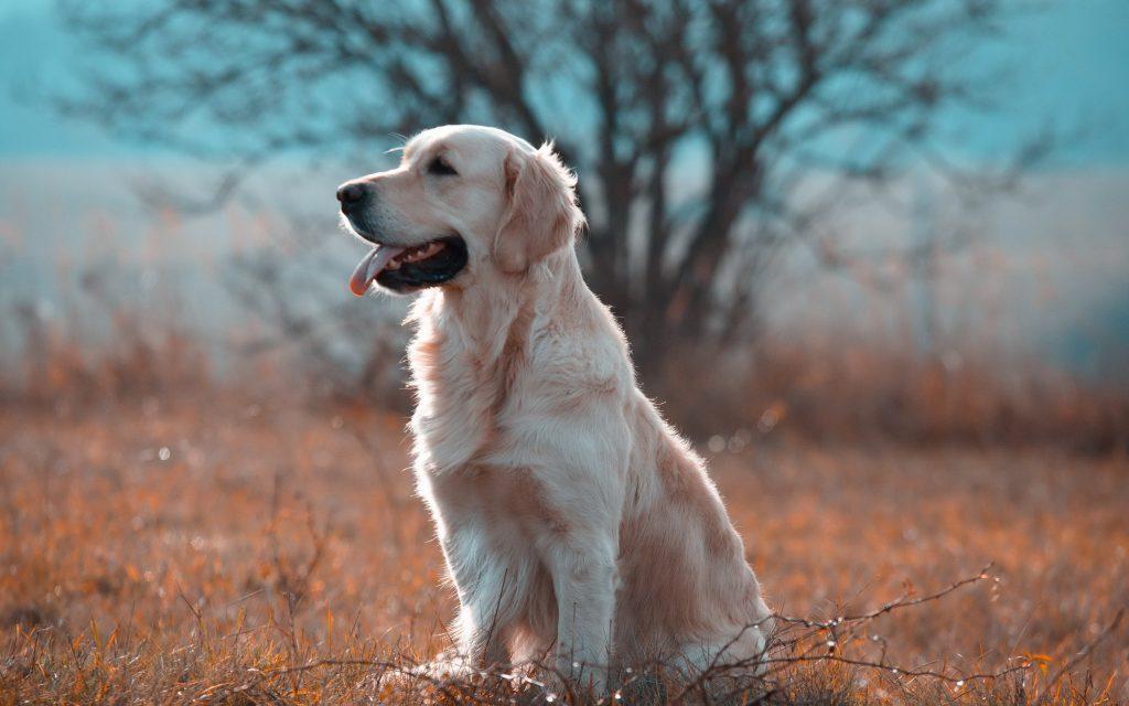 buscar razas de perros pequeños , perros mas pequeños razas , los perros mas chicos del mundo , razas de perros diminutos , cosas de perros baratas , imagenes de perros en adopcion , accesorios de perros baratos , venta de perros en linea , perros adultos pequeños , , lista de razas de perros pequeños , anuncios de perros en venta , los perros mas chicos , fotos de perros en venta , animales de perros , venta mascotas perros , los perros más chicos del mundo , revista todo perros