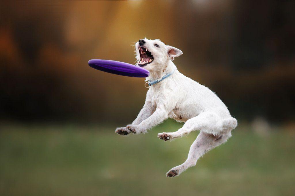 fotos de perros en adopcion , comprar online accesorios para perros , animales en los perros , educacion perros , perros abandonados para adoptar , adopcion perros y cachorros , distribuidora de alimentos para perros , perros perros , accesorios para perros bulldog , paginas web sobre perros , moda para perros , articulos sobre perros , perros en donacion , los perros mas chiquitos , accesorios para perros chicos , almacen de perros , perros en , mascotas de perros cachorros , donacion de perros de raza , raza de animales perros , buscar mascotas perros , fundacion de adopcion de perros , adopcion de perros gratis ,
