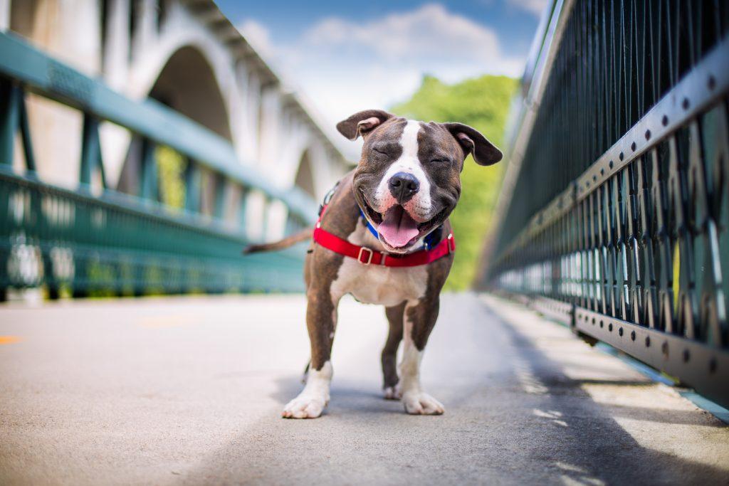 imagenes de perros cachorros de raza , nombre de los perros mas pequeños del mundo , los perros que son , la vida de los perros domesticos , informacion sobre los perros wikipedia , toda la informacion sobre los perros , quiero ver imágenes de perros , perros fotos de perros , es para perros , ver fotos de perros pequeños gratis ,