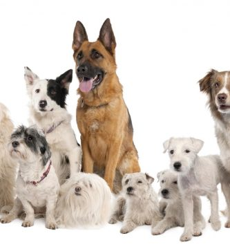 adopcion de perros pequeños , ropa para perros pequeños , tienda para perros , botas para perros , perros baratos , chubasquero para perros , perros miniatura , complementos para perros , impermeable para perros , pienso perros , perros para comprar , razas de perros chiquitos , ver perros , venta de perros pequeños , perros para niños , para perros , perros abandonados , cunas para perros , pienso para perros , informacion sobre los perros , transportines para perros , camas para perros grandes , trajes para perros , alforjas para perros , chalecos para perros,