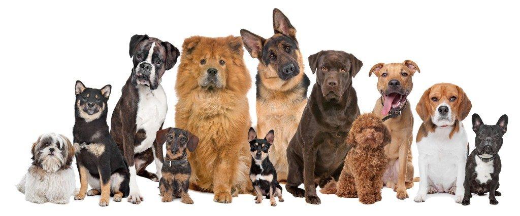 venta de perros pastor aleman , perros raza adopcion , donde venden perros , tienda online perros , paginas de adopcion de perros , disfraces para perros , ropa para perros online , venta de perros chihuahua , cuchas para perros , venta de perros pitbull , entrenador de perros , piensos para perros economicos , comprar perros online , perros de raza para adoptar , paginas para adoptar perros , perros pug en venta , perros pitbull en venta , collares para perros grandes , complementos perros pequeños , clicker para perros , todos los perros , complementos perros , ver razas de perros pequeños , segunda mano perros , ver perros en adopcion , centro de adopcion de perros , perros perdidos , centro adopcion perros , alimentos premium para perros , perros grandes en adopcion , razas de perros miniatura , lugares donde adoptan perros , marcas de pienso para perros