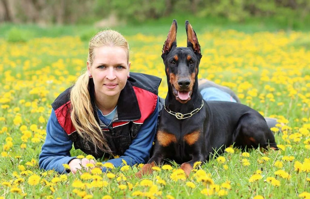 historia del doberman , problemas de salud del doberman , actividad fisica del doberman , cual es el origen del doberman , el doberman y los niños , doberman cachorro , dobermann , doberman albino , doberman pinscher , doberman blanco , doberman regalo , doberman marron , doberman en adopcion , doberman adopcion